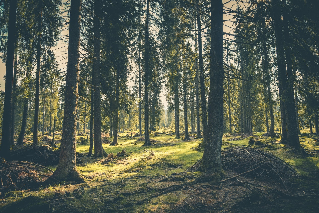 Activiteiten Ardennen